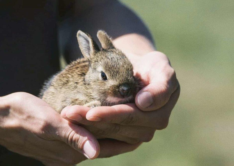 ウサギのマーク 動物実験 クルエルティ―フリー