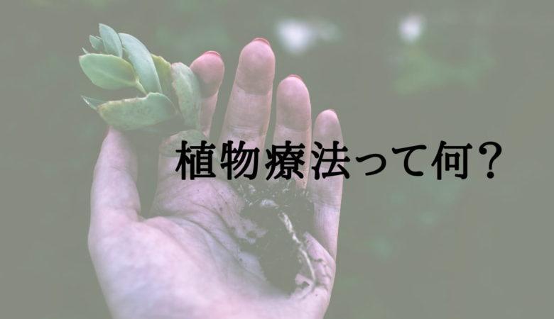 植物療法(フィトテラピー)とは?植物の力で心身をケア【女性必見】