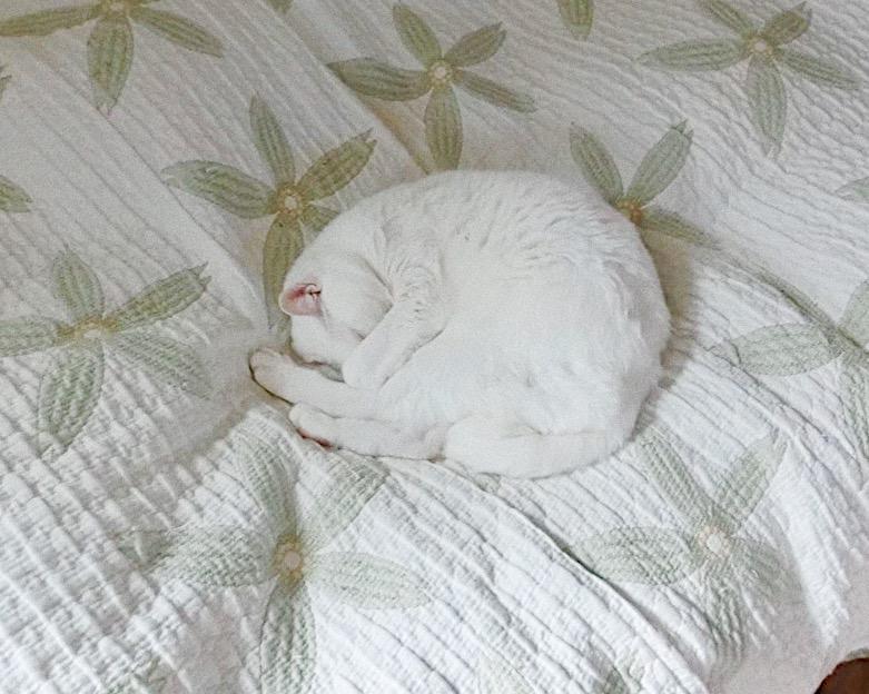 保護猫 捨て猫