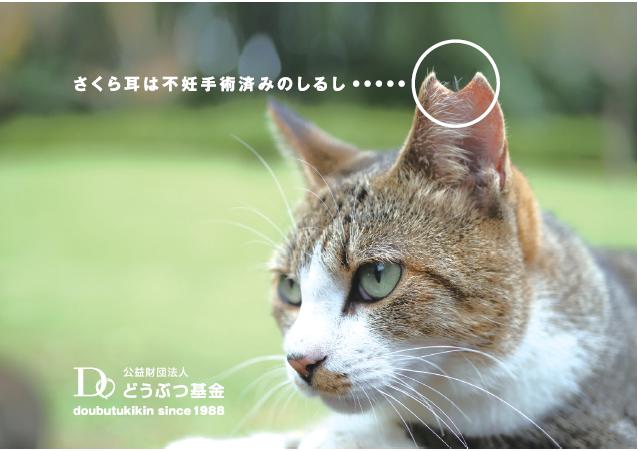 保護猫 さくらねこ